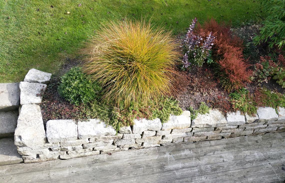 Good Pflanzen Im Garten Amazing Pictures